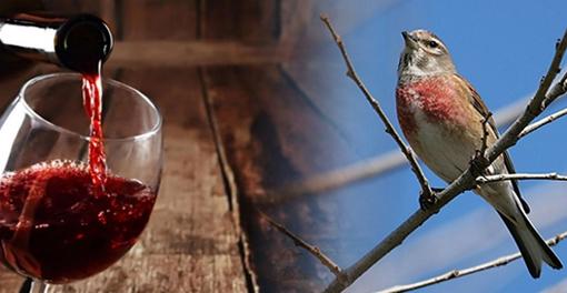 entre-vinos-y-aves